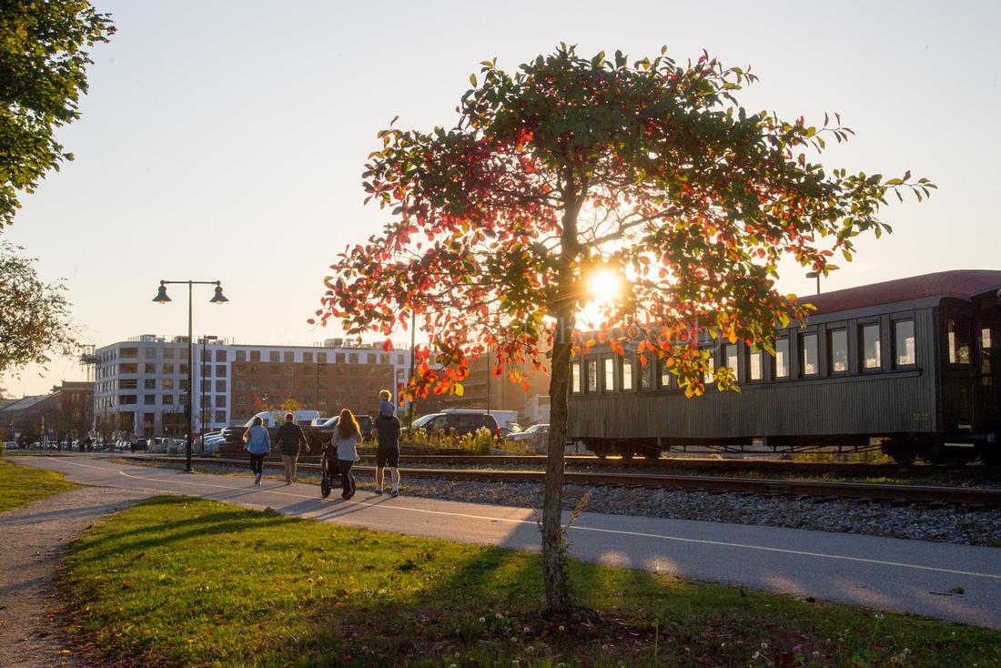 Autumn Tree Along the Eastern Promenade Trail