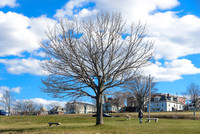 Eastern Promenade Tree, Off of Cutter Street