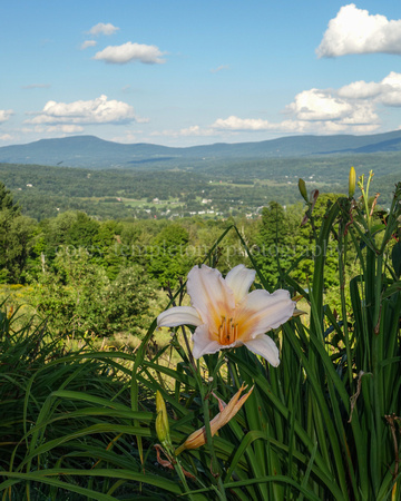 Flower and Mountains Stowe VT